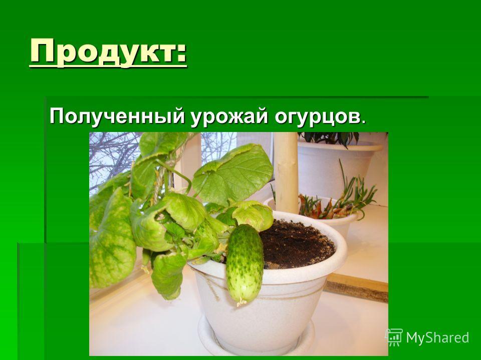 Продукт: Полученный урожай огурцов.