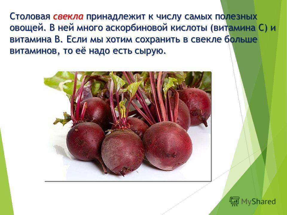 Столовая свекла принадлежит к числу самых полезных овощей. В ней много аскорбиновой кислоты (витамина С) и витамина В. Если мы хотим сохранить в свекле больше витаминов, то её надо есть сырую.