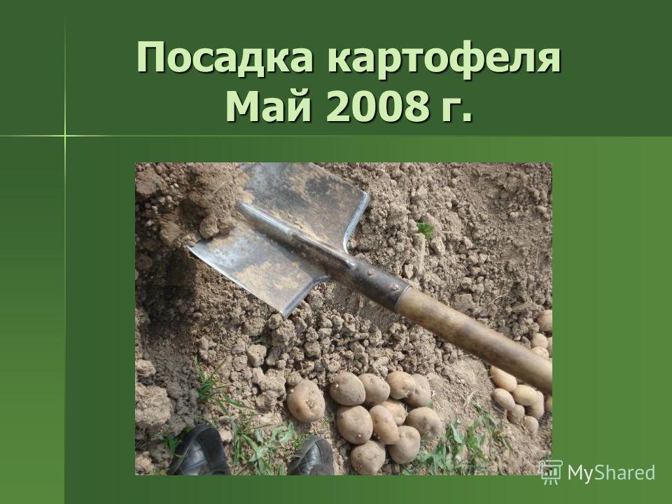 Посадка картофеля Май 2008 г.