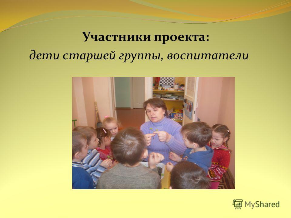 Участники проекта: дети старшей группы, воспитатели
