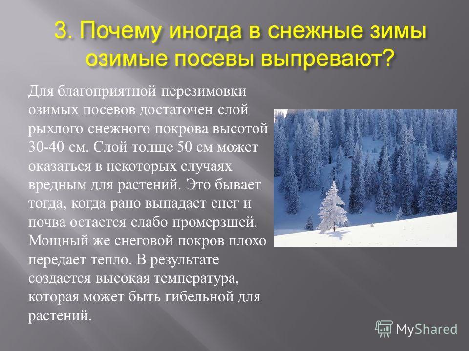 Для благоприятной перезимовки озимых посевов достаточен слой рыхлого снежного покрова высотой 30-40 см. Слой толще 50 см может оказаться в некоторых случаях вредным для растений. Это бывает тогда, когда рано выпадает снег и почва остается слабо проме