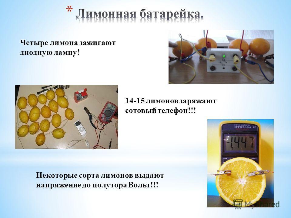 Четыре лимона зажигают диодную лампу! 14-15 лимонов заряжают сотовый телефон!!! Некоторые сорта лимонов выдают напряжение до полутора Вольт!!!