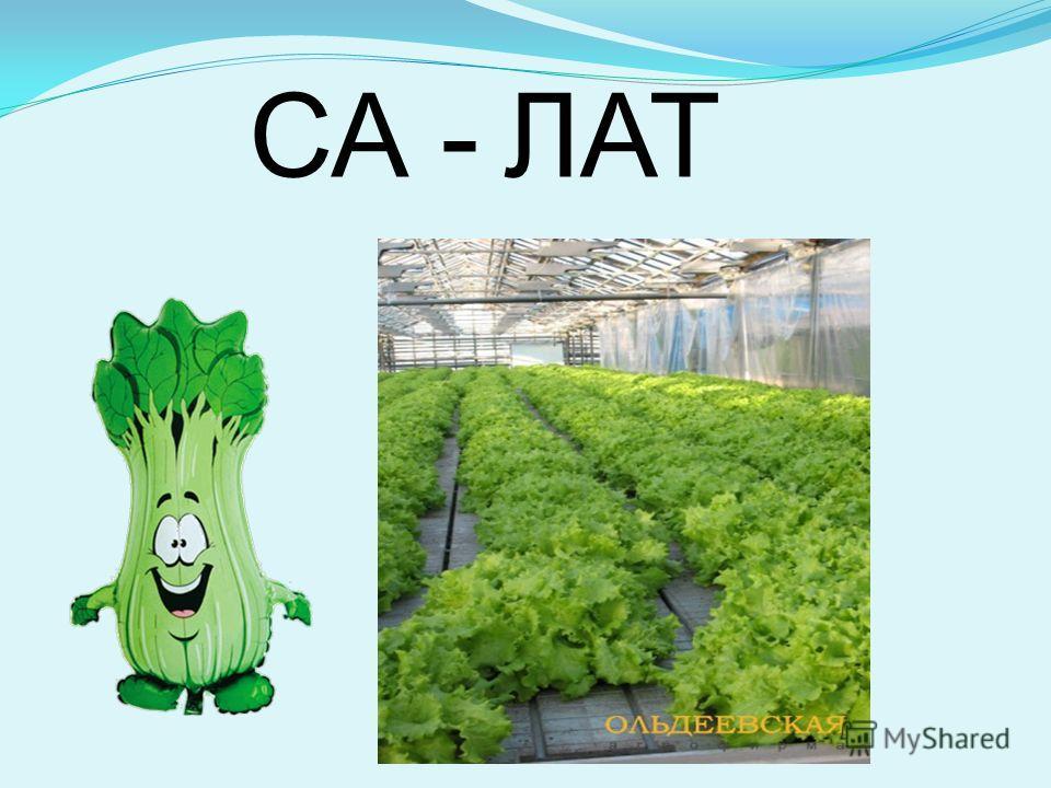 СА -ЛАТ
