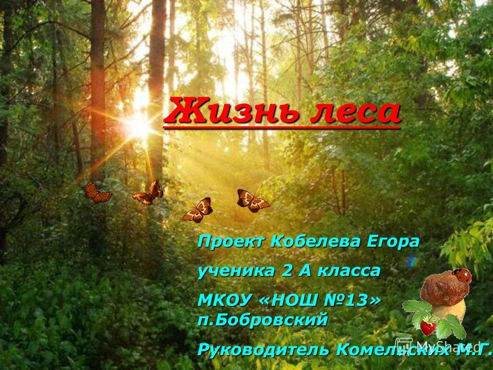 Жизнь леса Проект Кобелева Егора ученика 2 А класса МКОУ «НОШ 13» п.Бобровский Руководитель Комельских М.Г.
