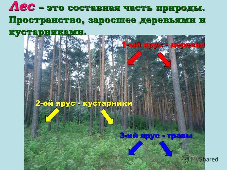 Лес – это составная часть природы. Пространство, заросшее деревьями и кустарниками. 1-ый ярус - деревья 2-ой ярус - кустарники 3-ий ярус - травы