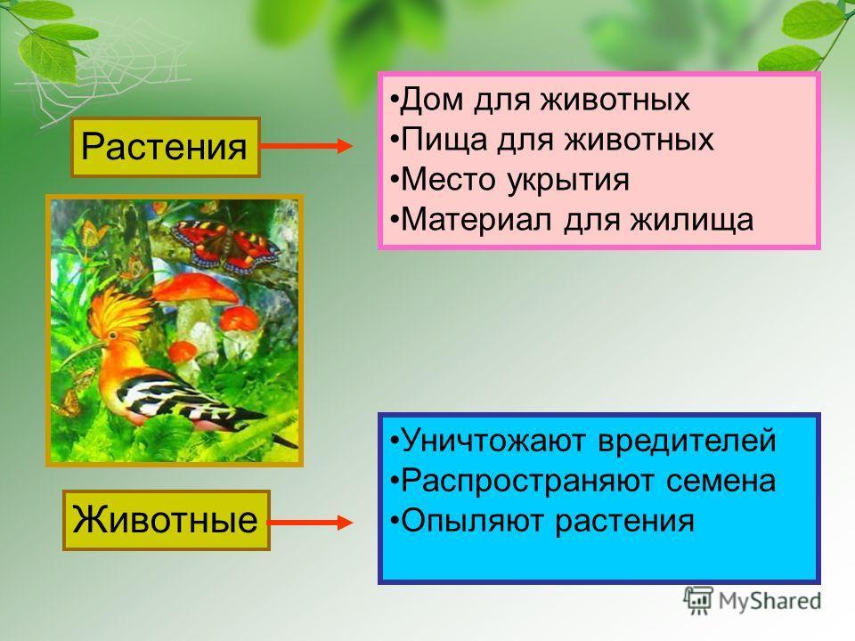 Растения Животные Дом для животных Пища для животных Место укрытия Материал для жилища Уничтожают вредителей Распространяют семена Опыляют растения
