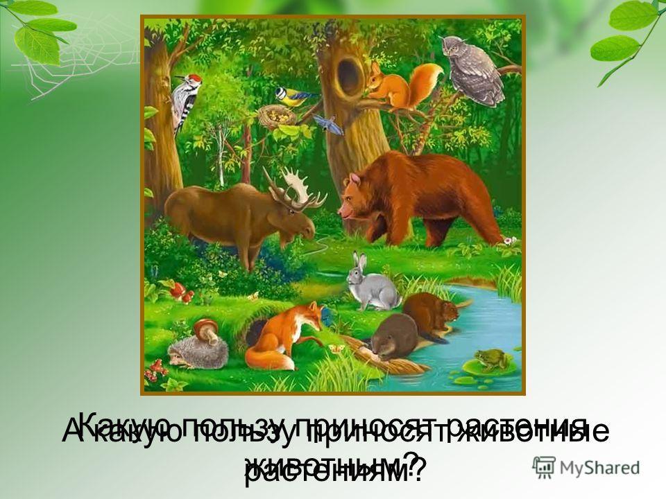 Какую пользу приносят растения животным? А какую пользу приносят животные растениям?