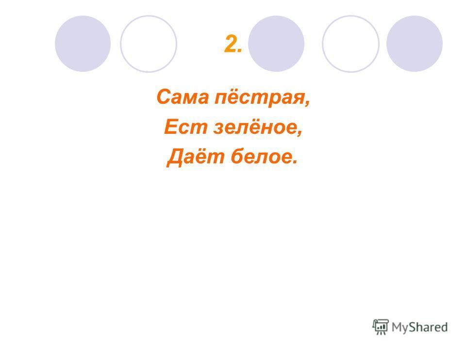 2. Сама пёстрая, Ест зелёное, Даёт белое.