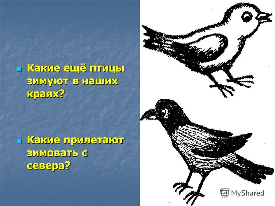 Какие ещё птицы зимуют в наших краях? Какие ещё птицы зимуют в наших краях? Какие прилетают зимовать с севера? Какие прилетают зимовать с севера?