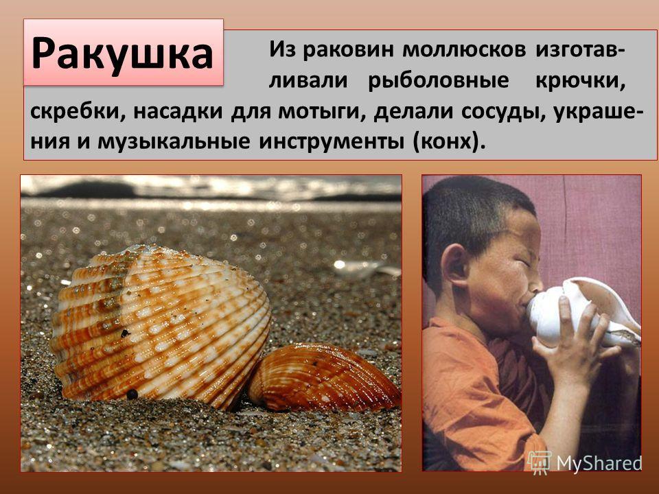 Из раковин моллюсков изготав- ливали рыболовные крючки, скребки, насадки для мотыги, делали сосуды, украше- ния и музыкальные инструменты (конх). Ракушка