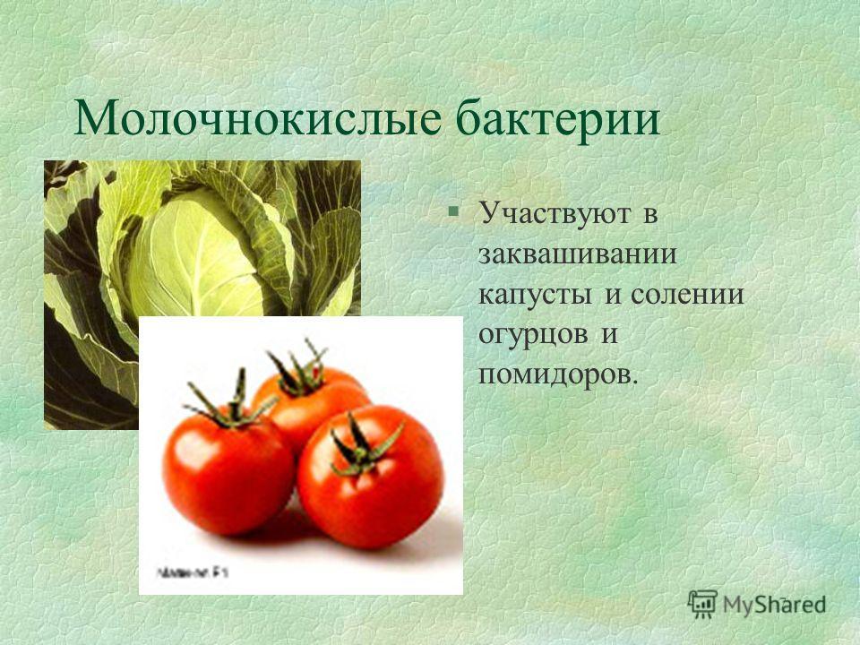 7 Молочнокислые бактерии §Участвуют в заквашивании капусты и солении огурцов и помидоров.