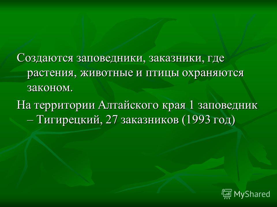 Создаются заповедники, заказники, где растения, животные и птицы охраняются законом. На территории Алтайского края 1 заповедник – Тигирецкий, 27 заказников (1993 год)