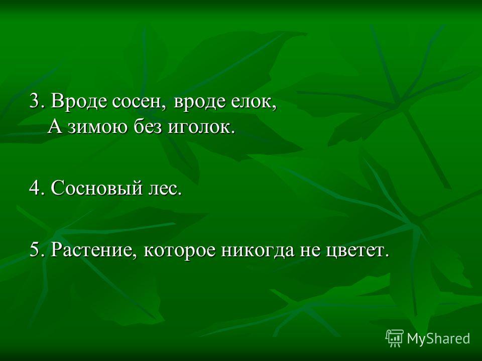 3. Вроде сосен, вроде елок, А зимою без иголок. 4. Сосновый лес. 5. Растение, которое никогда не цветет.