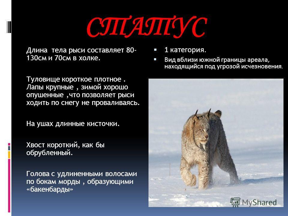 Отряд Хищные-Carnivora Семейство Кошачьи-Felidae
