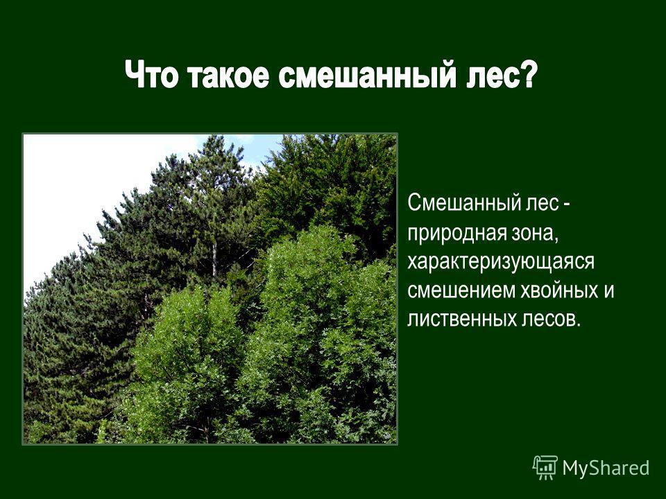 Смешанный лес - природная зона, характеризующаяся смешением хвойных и лиственных лесов.