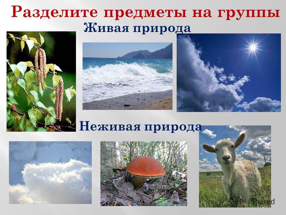 Разделите предметы на группы Живая природа Неживая природа