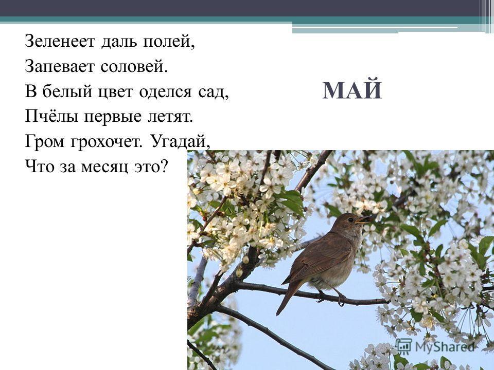 МАЙ Зеленеет даль полей, Запевает соловей. В белый цвет оделся сад, Пчёлы первые летят. Гром грохочет. Угадай, Что за месяц это?