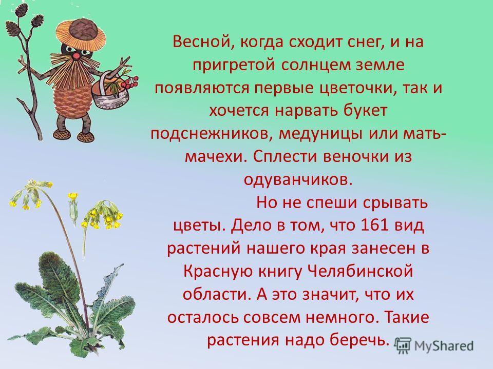 Весной, когда сходит снег, и на пригретой солнцем земле появляются первые цветочки, так и хочется нарвать букет подснежников, медуницы или мать- мачехи. Сплести веночки из одуванчиков. Но не спеши срывать цветы. Дело в том, что 161 вид растений нашег