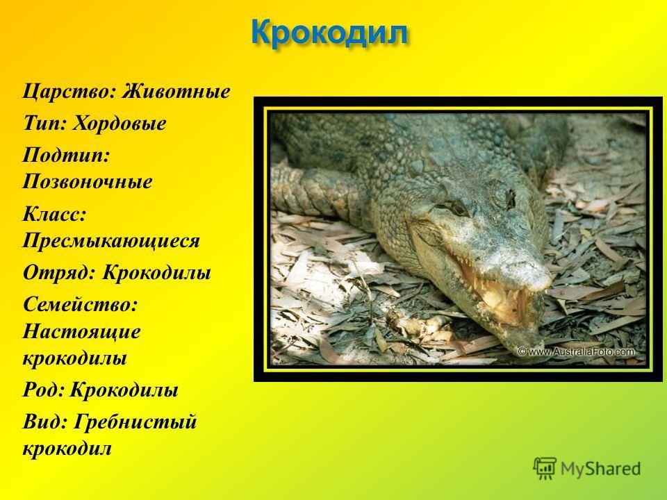 Крокодил Царство : Животные Тип : Хордовые Подтип : Позвоночные Класс : Пресмыкающиеся Отряд : Крокодилы Семейство : Настоящие крокодилы Род : Крокодилы Вид : Гребнистый крокодил