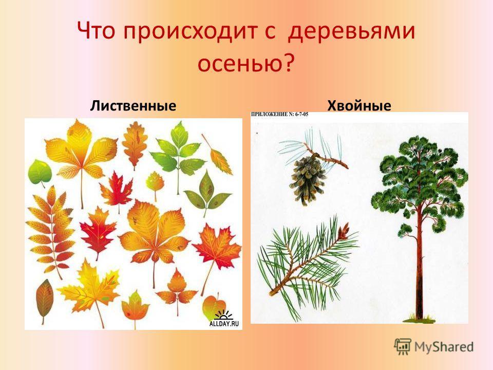 Почему в природе происходит листопад? С наступлением холодов почва охлаждается, а вместе с ней и почвенная влага. Охлаждённую воду корни растений не всасывают. Кроме того оставшиеся на зиму листья послужили бы для растений источником бедствия: ветви