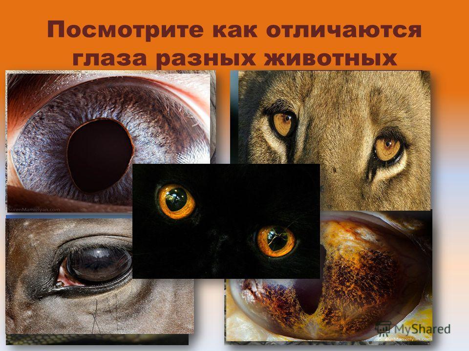 Посмотрите как отличаются глаза разных животных