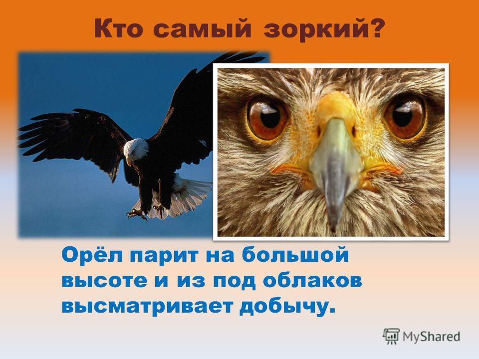 Кто самый зоркий? Орёл парит на большой высоте и из под облаков высматривает добычу.