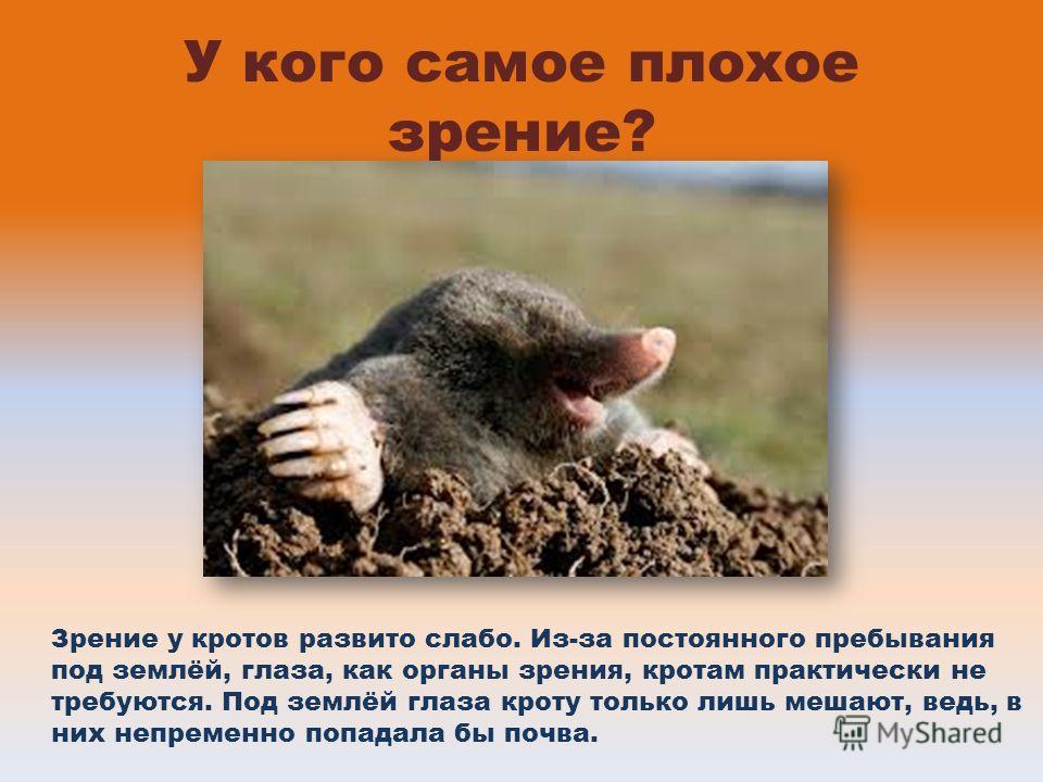 У кого самое плохое зрение? Зрение у кротов развито слабо. Из-за постоянного пребывания под землёй, глаза, как органы зрения, кротам практически не требуются. Под землёй глаза кроту только лишь мешают, ведь, в них непременно попадала бы почва.