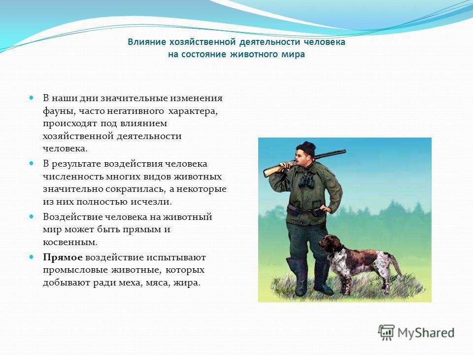 Влияние хозяйственной деятельности человека на состояние животного мира В наши дни значительные изменения фауны, часто негативного характера, происходят под влиянием хозяйственной деятельности человека. В результате воздействия человека численность м