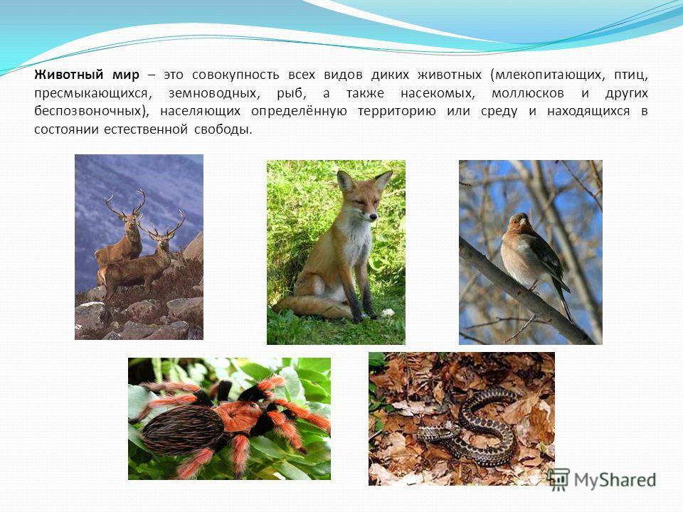 Животный мир – это совокупность всех видов диких животных (млекопитающих, птиц, пресмыкающихся, земноводных, рыб, а также насекомых, моллюсков и других беспозвоночных), населяющих определённую территорию или среду и находящихся в состоянии естественн