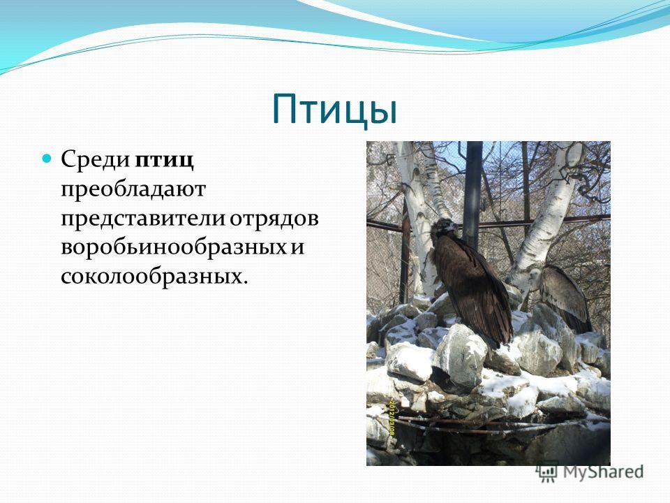 Птицы Среди птиц преобладают представители отрядов воробьинообразных и соколообразных.