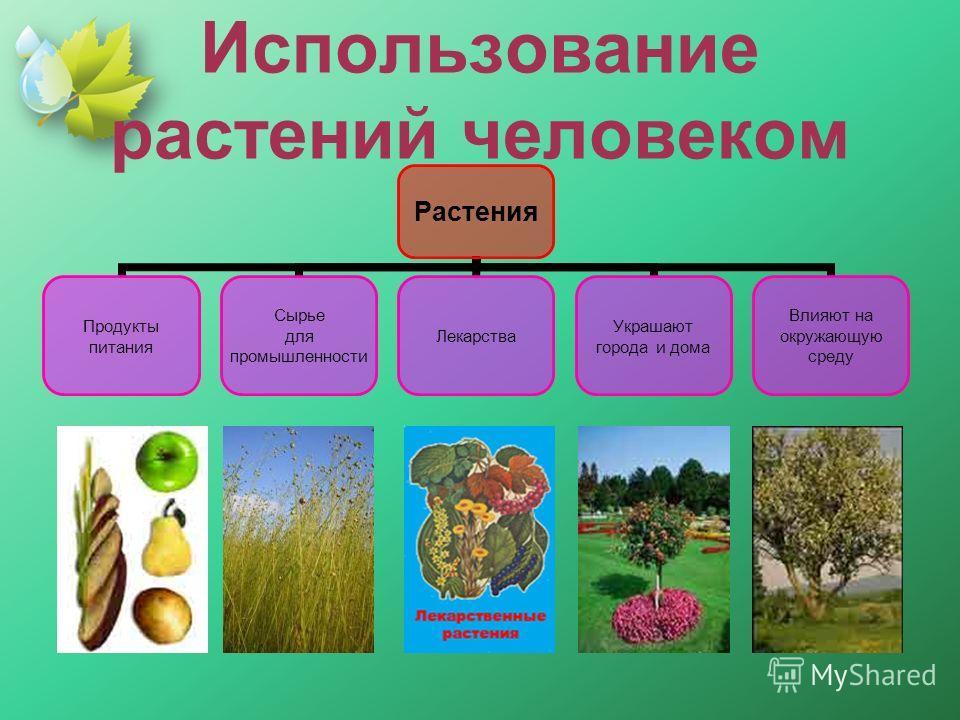 Использование растений человеком Растения Продукты питания Сырье для промышленности Лекарства Украшают города и дома Влияют на окружающую среду