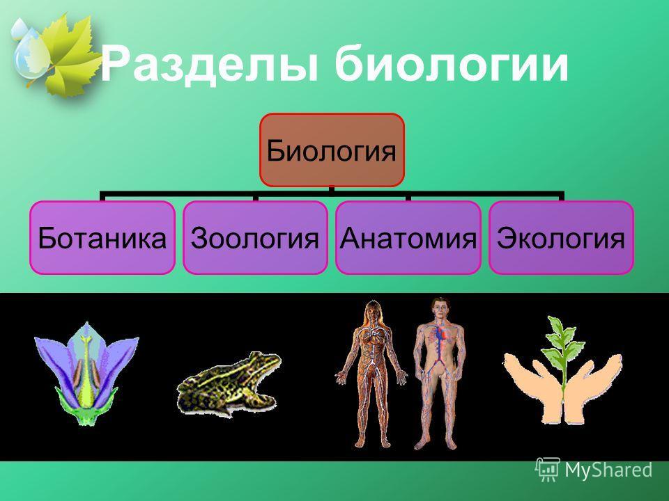 Разделы биологии Биология Ботаника ЗоологияАнатомия Экология