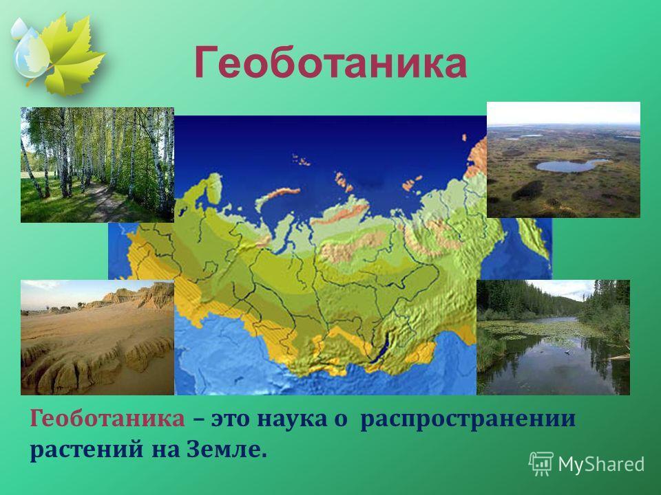 Геоботаника Геоботаника – это наука о распространении растений на Земле.