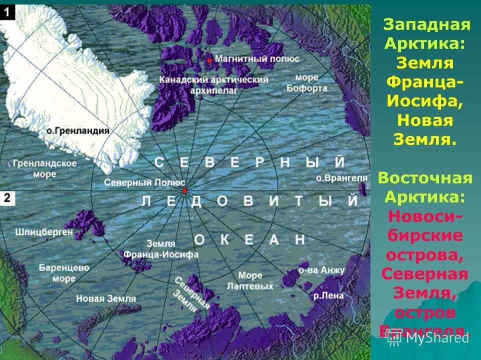 Западная Арктика: Земля Франца- Иосифа, Новая Земля. Восточная Арктика: Новоси- бирские острова, Северная Земля, остров Врангеля.