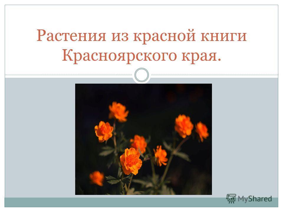 Растения из красной книги Красноярского края.