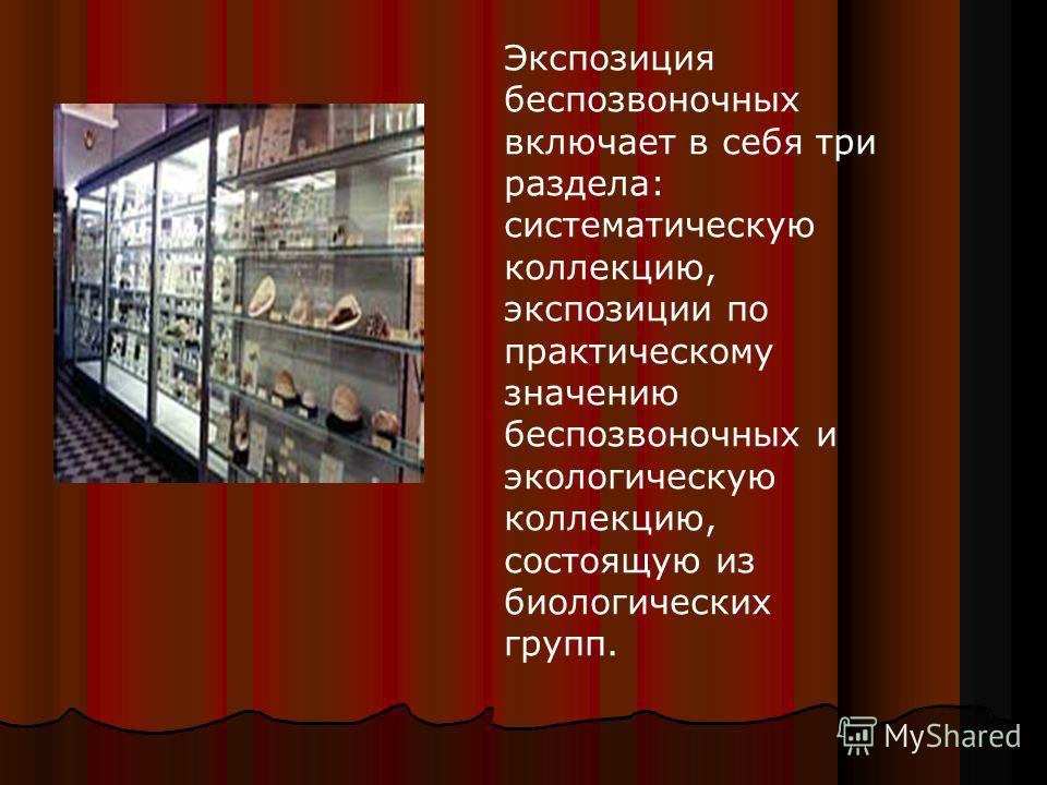 Экспозиция беспозвоночных включает в себя три раздела: систематическую коллекцию, экспозиции по практическому значению беспозвоночных и экологическую коллекцию, состоящую из биологических групп.