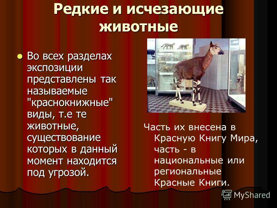 Редкие и исчезающие животные Во всех разделах экспозиции представлены так называемые