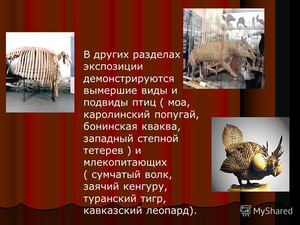 В других разделах экспозиции демонстрируются вымершие виды и подвиды птиц ( моа, каролинский попугай, бонинская кваква, западный степной тетерев ) и млекопитающих ( сумчатый волк, заячий кенгуру, туранский тигр, кавказский леопард).