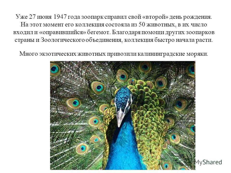 Уже 27 июня 1947 года зоопарк справил свой «второй» день рождения. На этот момент его коллекция состояла из 50 животных, в их число входил и «оправившийся» бегемот. Благодаря помощи других зоопарков страны и Зоологического объединения, коллекция быст