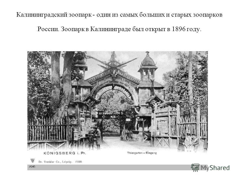 Калининградский зоопарк - один из самых больших и старых зоопарков России. Зоопарк в Калининграде был открыт в 1896 году.