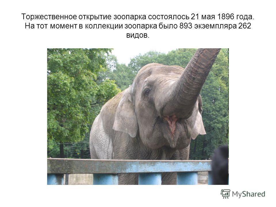 Торжественное открытие зоопарка состоялось 21 мая 1896 года. На тот момент в коллекции зоопарка было 893 экземпляра 262 видов.
