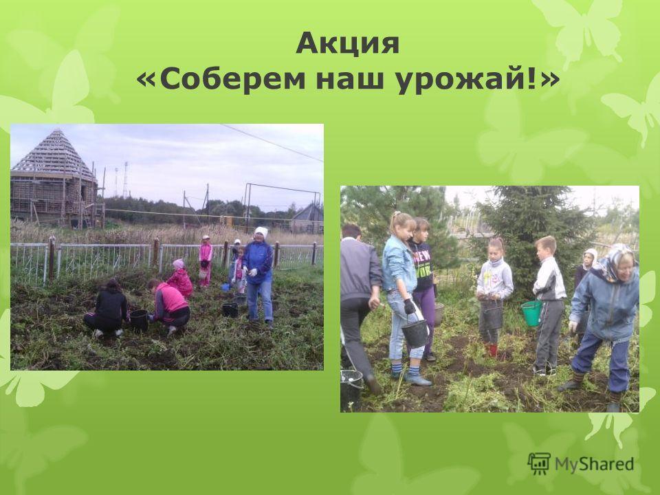 Акция «Соберем наш урожай!»