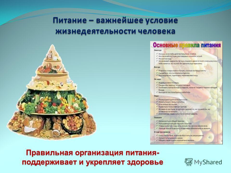 Питание – важнейшее условие жизнедеятельности человека Правильная организация питания- поддерживает и укрепляет здоровье