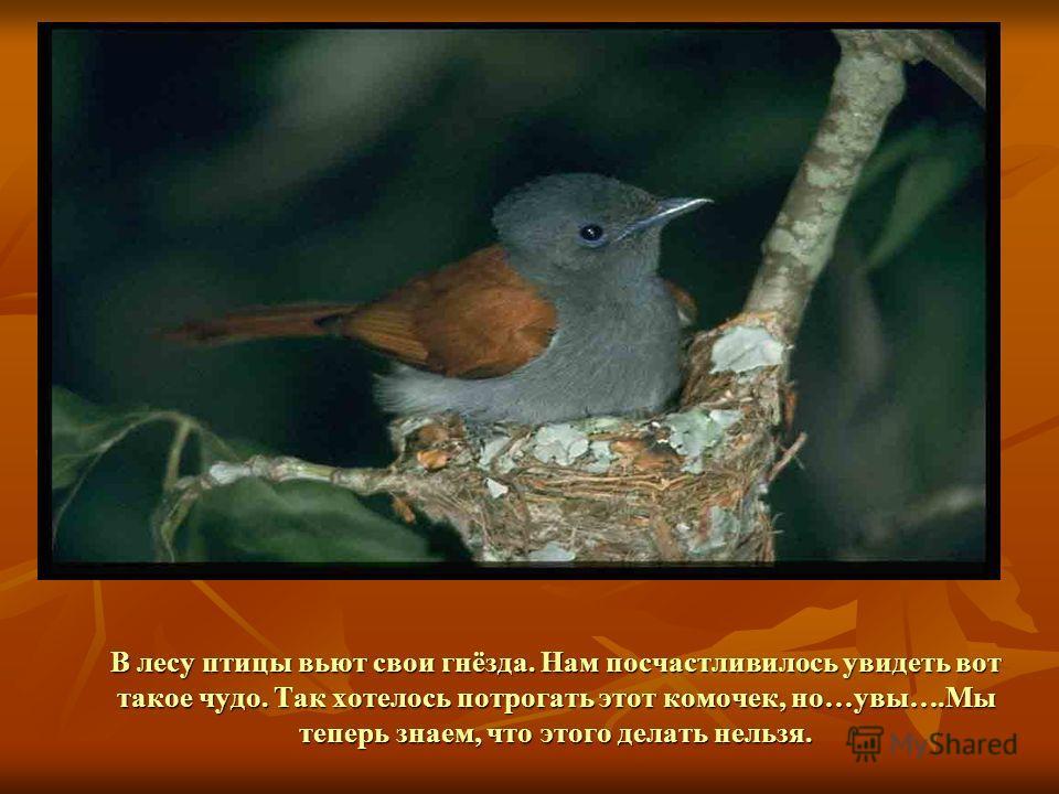 Кто у нас в лесу живёт и орешки всё грызёт? Что не сгрызла…спрятала. Она их под пень кладёт, А из них уж ель растёт.