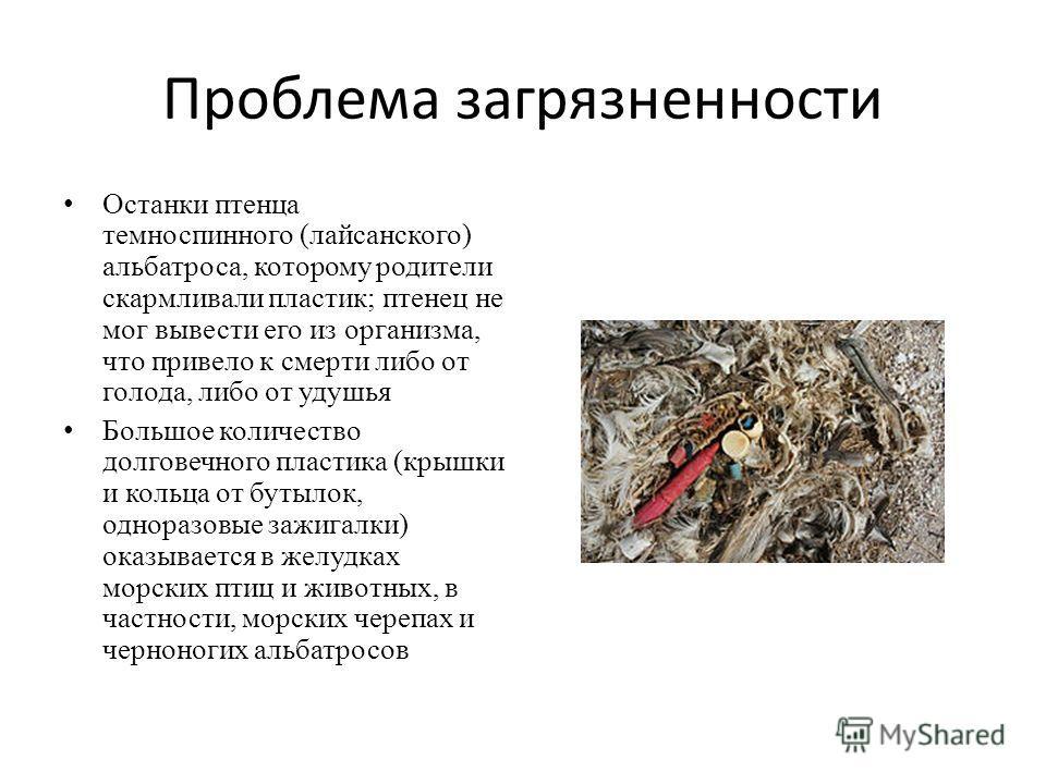 Проблема загрязненности Останки птенца темноспинного (лейсанского) альбатроса, которому родители скармливали пластик; птенец не мог вывести его из организма, что привело к смерти либо от голода, либо от удушья Большое количество долговечного пластика