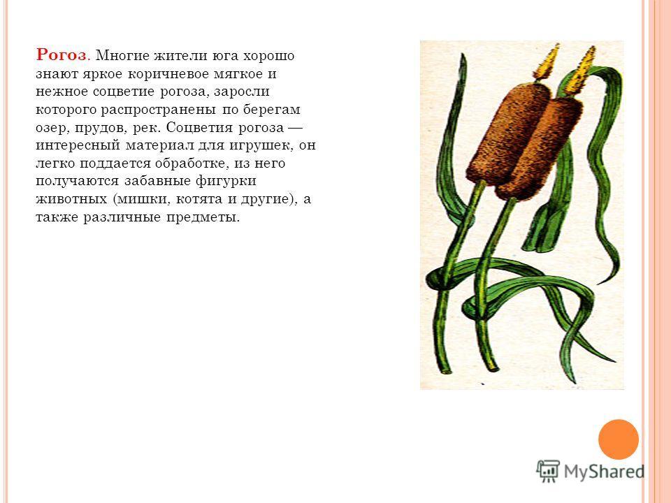 Рогоз. Многие жители юга хорошо знают яркое коричневое мягкое и нежное соцветие рогоза, заросли которого распространены по берегам озер, прудов, рек. Соцветия рогоза интересный материал для игрушек, он легко поддается обработке, из него получаются за