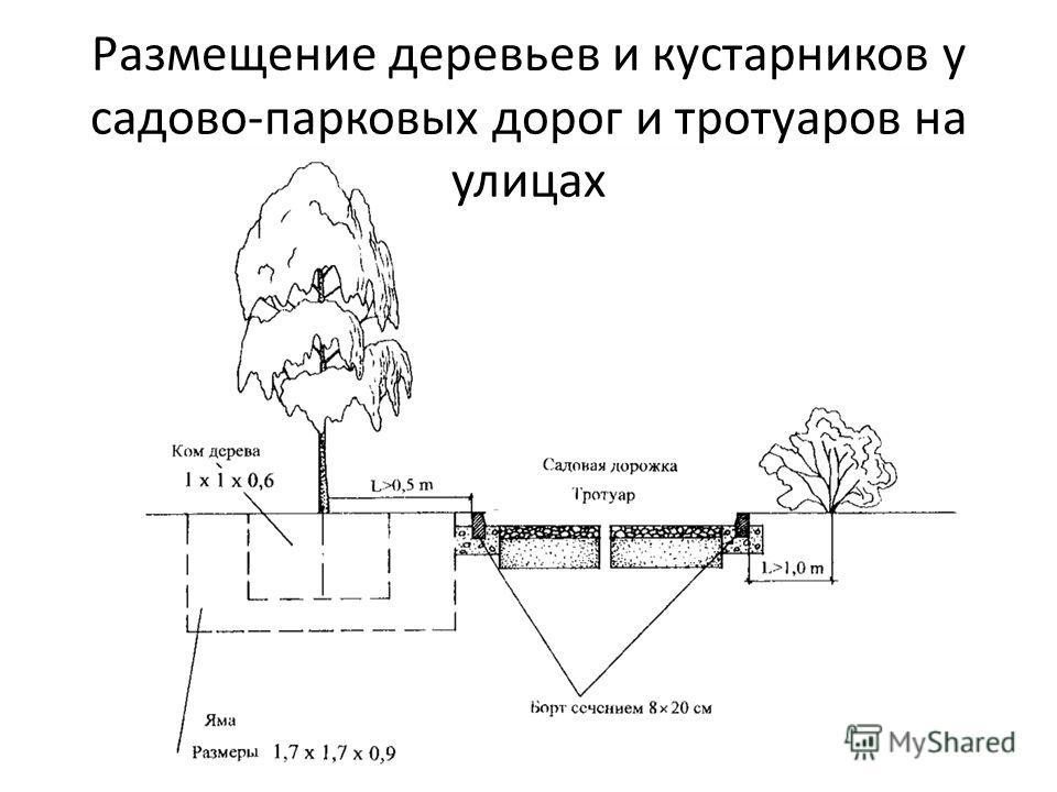 Размещение деревьев и кустарников у садово-парковых дорог и тротуаров на улицах