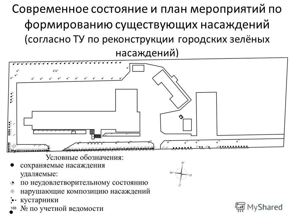Современное состояние и план мероприятий по формированию существующих насаждений (согласно ТУ по реконструкции городских зелёных насаждений)