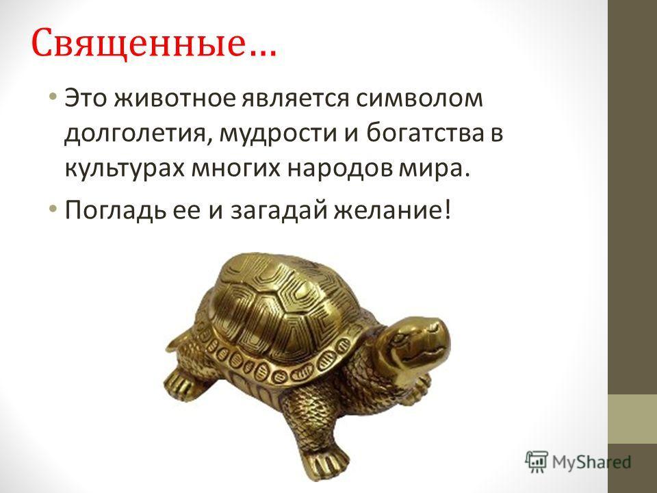 Священные… Это животное является символом долголетия, мудрости и богатства в культурах многих народов мира. Погладь ее и загадай желание!