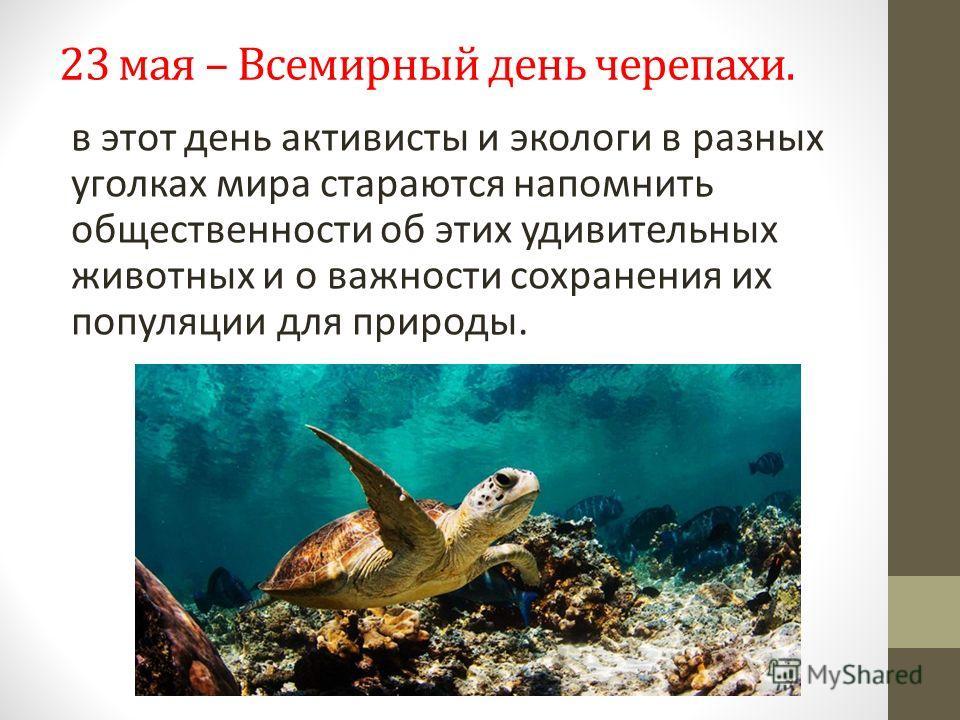 23 мая – Всемирный день черепахи. в этот день активисты и экологи в разных уголках мира стараются напомнить общественности об этих удивительных животных и о важности сохранения их популяции для природы.